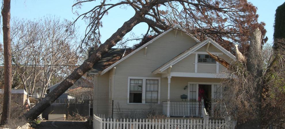 Danville Emergency Tree Removal