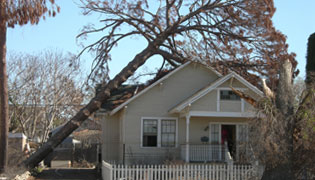 Danville Emergency Tree Removal