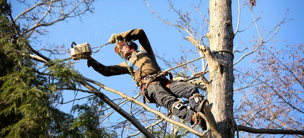 Danville Tree Pruning