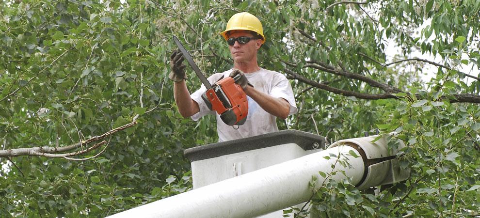 Plainfield Tree Service